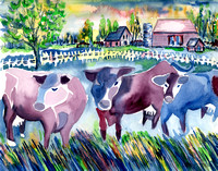 Purple Cows-Minn